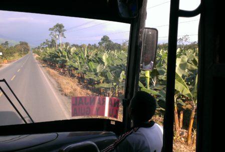 Bananenplantagen, so weit das Auge reicht!
