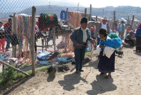 Auf dem Tiermarkt von Otavalo